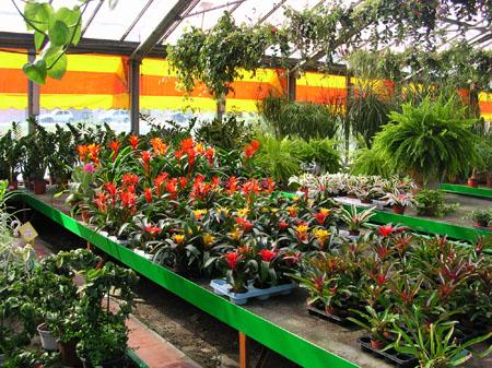 Piante da interno milano vendita lodi crema casa ufficio for Negozi arredo giardino milano