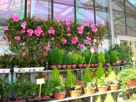 piante da esterno milano lodi crema casa